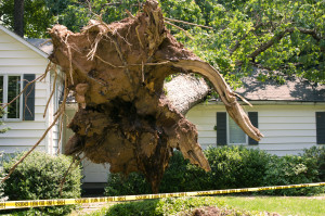 Tree house damage