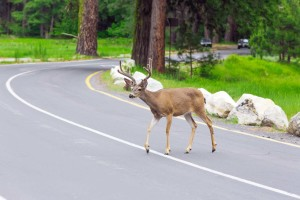 Watch Out For Animals on the Road